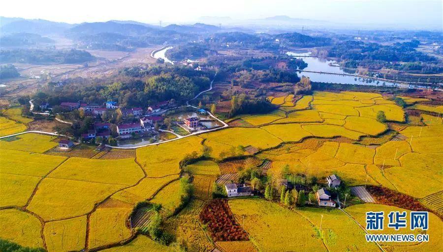 安徽省舒城县棠树乡八里村的稻田和民居(2017年11月3日摄)。新华社记者陶明摄